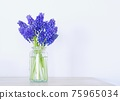 muscari, bloom, blossom 75965034