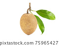 One fresh sapodilla with leaves on white background with clipping path 75965427