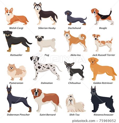 Colored Purebred Dogs Icon Set 75969052