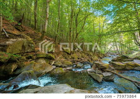 mountain stream runs through forest. spring nature scenery on a sunny day. rapid water flows among the rocks. beech trees on the shore in lush green foliage 75973864