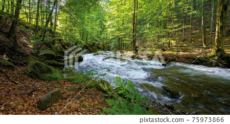 mountain stream runs through forest. spring nature scenery on a sunny day. rapid water flows among the rocks. beech trees on the shore in lush green foliage 75973866