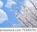 Cherry Blossom 75980791
