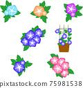 牽牛花 花朵 花 75981538
