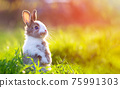 Cute little bunny in grass with ears up looking away 75991303