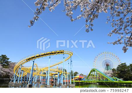 Hanazouji公園盛開 75998247