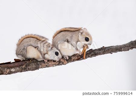 heterosexual couple, animal, animals 75999614