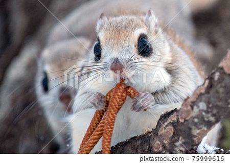 animal, animals, mammal 75999616