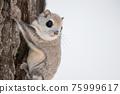 animal, animals, small animal 75999617