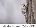 animal, animals, small animal 75999991
