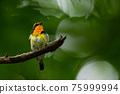 wild bird, bird, birds 75999994