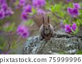 squirrel, squirrels, small animal 75999996