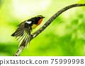 wild bird, bird, birds 75999998