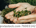Male hands holding micro green sprouts, close up 76003142