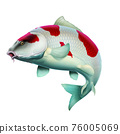 Carp white red fish (koi) realism isolate illustration. Fishing for big carp, feeder fishing, carp fishing. 76005069