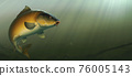 Carp fish (koi) realism isolate illustration. Fishing for big carp, feeder fishing, carp fishing. Carp underwater at the bottom of a river or lake. 76005143