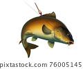 Fishing for carp with a float bait. (koi) realism isolate illustration. Fishing for big carp, feeder fishing, carp fishing. 76005145