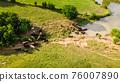 Cows at a waterhole on a farm 76007890