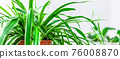 Green plants home decoration on white background 76008870