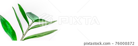 Green plants leaves on white background 76008872