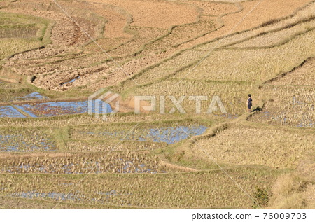Rice field landscape in Madagascar 76009703