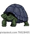 人物 烏龜 動物 76028405