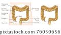 大腸 illustration 數字動畫 76050656