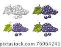 Bunch of grapes with berry and leaves. Vintage engraving vector 76064241