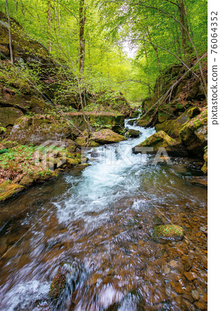 creek winding through rocks in the forest. rapid water flows among mossy boulders and beech trees. wonderful nature scenery in spring 76064352
