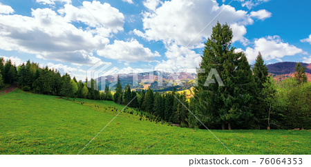 forest on the grassy hill. beautiful nature landscape in spring. snow capped mountains in the distance beneath a clouds on the blue sky. sunny weather 76064353