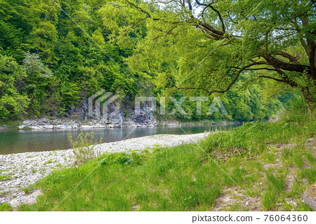 river flow under the rock. beautiful nature landscape in spring. deciduous trees on the shore 76064360