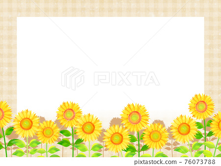 sunflower, sunflowers, summer 76073788