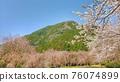 벚꽃과 산 76074899