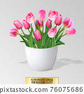Bouquet of pink tulips in vase isolated on white background 76075686