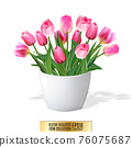 Bouquet of pink tulips in vase isolated on white background 76075687