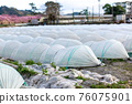 Field winter vegetables tunnel cultivation 76075901