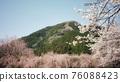 벚꽃과 산 76088423