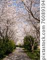 春天 櫻花 花 76089394