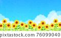 向日葵 向日葵園 花朵 76099040