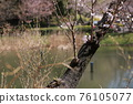 I walked in Mitsuike Park on a sunny day 76105077