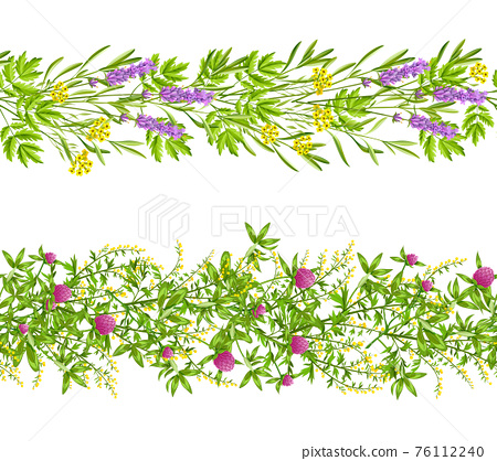 Herbs And Wild Flowers Seamless Pattern 76112240