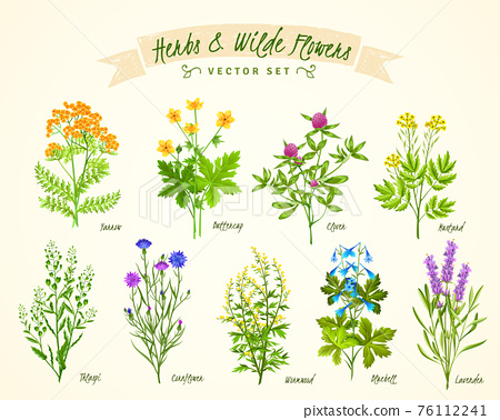 Herbs And Wild Flowers Background Set 76112241