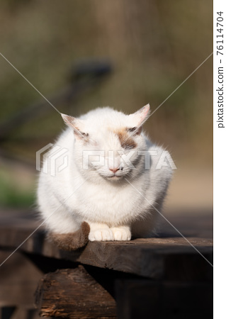 A cat that goes out in the sun 76114704