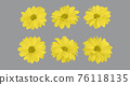 Set of floral illuminating yellow chrysanthemum buds in different camera angles isolated on ultimate gray background,  76118135