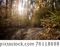 Autumn road in the forest. Golden autumn. Red wood 76118698
