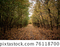 Autumn road in the forest. Golden autumn. Red wood 76118700