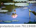 lotus and leaf 76119488