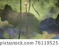 lotus leaf 76119525