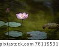 lotus and leaf 76119531