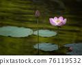 lotus and leaf 76119532