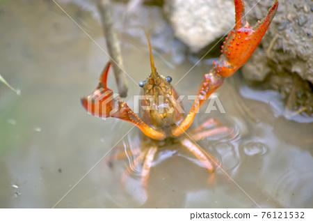 crayfish 76121532